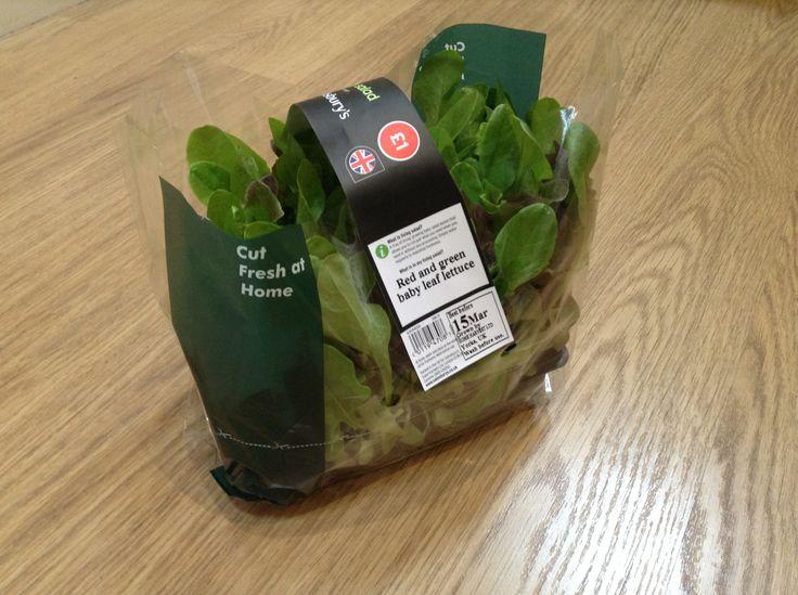 Sainbury's living lettuce