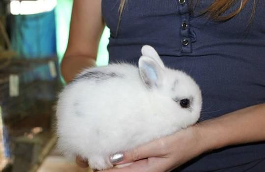 1000 Ideas About Baby Rabbits For Sale On Pinterest