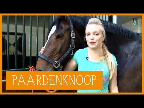 Paardenknoop | PaardenpraatTV - YouTube