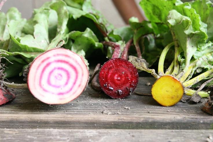 Multicoloured beets of organic Nature & More grower Krispijn van den Dries