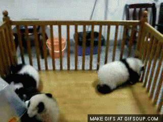 How Old Is Desiigner Panda Animals Giff #6541 - Funny Panda Giffs| Funny Giffs| Panda Giffs