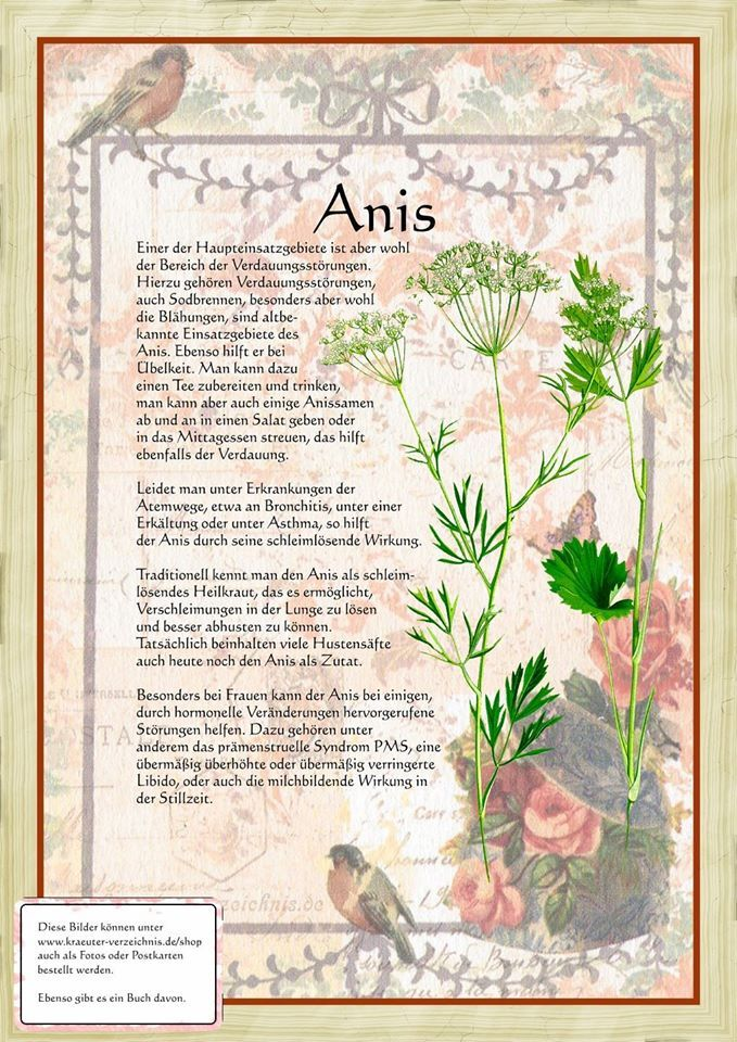 Anis - erweckt die feinstofflichen Energien für magische Handlungen, Schutz, Jugend, Reinigung. Samen in Leinensäckchen bei sich tragen oder an Türschwellen und Fenster legen. Legt man einen Anisbeutel unter das Kopfkissen schützt es vor Alpträumen.