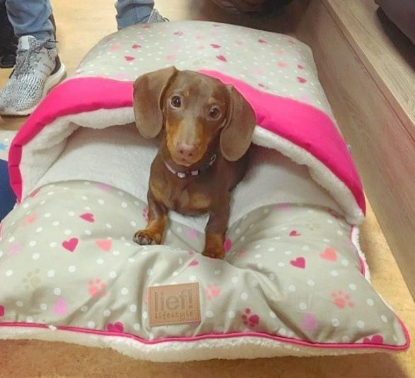 lief! lifestyle dierenaccessoires voor kat & hond - hondenmand blauw | pets accessories for cats & dogs | dachshund | teckel