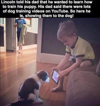 How to train a Dog funny pics, funny gifs, funny videos, funny memes, funny jokes. LOL Pics app is for iOS, Android, iPhone, iPod, iPad, Tablet