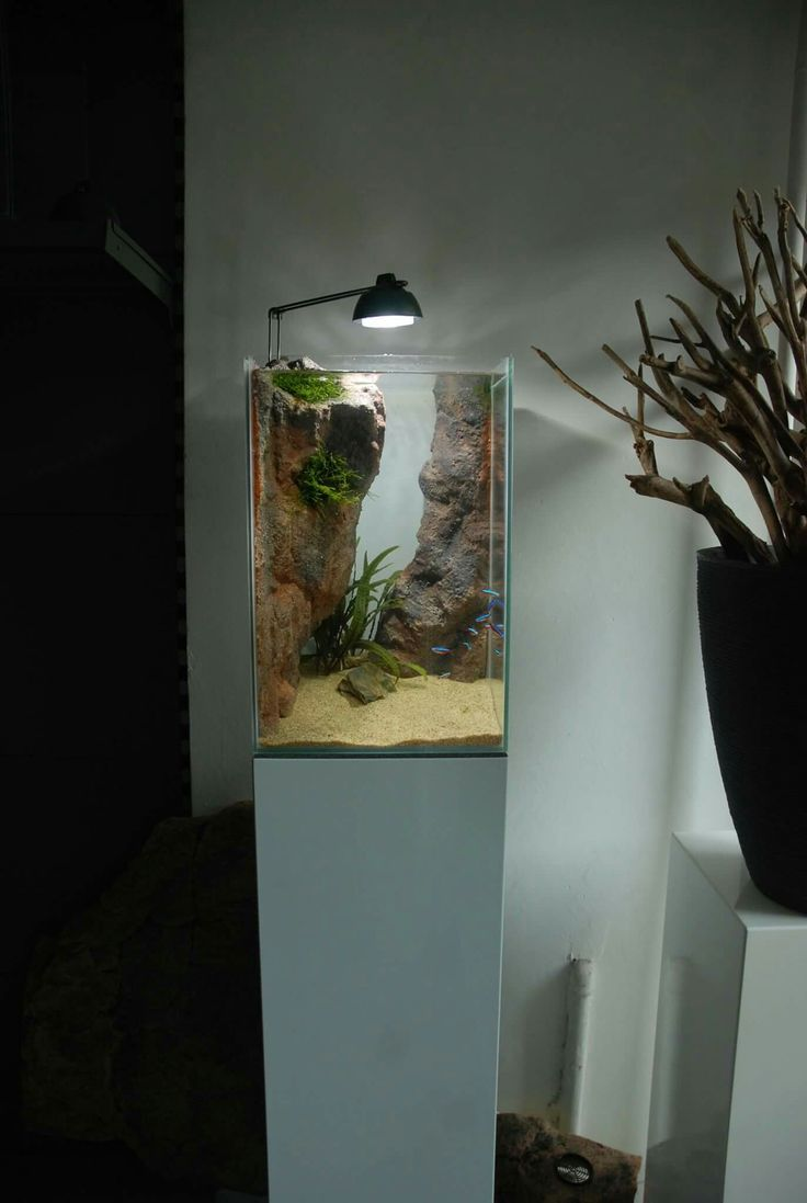 vertical aquascape eheim tank