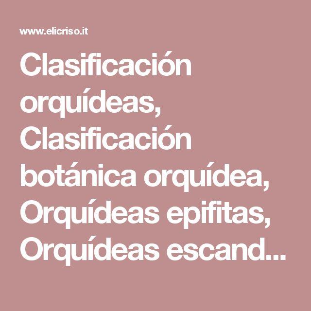 Clasificación orquídeas, Clasificación botánica orquídea, Orquídeas epifitas, Orquídeas escandentes, Orquídeas terrestres, Phylum Euphyta, Division Angiospermae, Clase monocotiledóneas, Orden Gynandreae, Familia Orchidaceae, Genero, Especies, Orquídeas parasitos