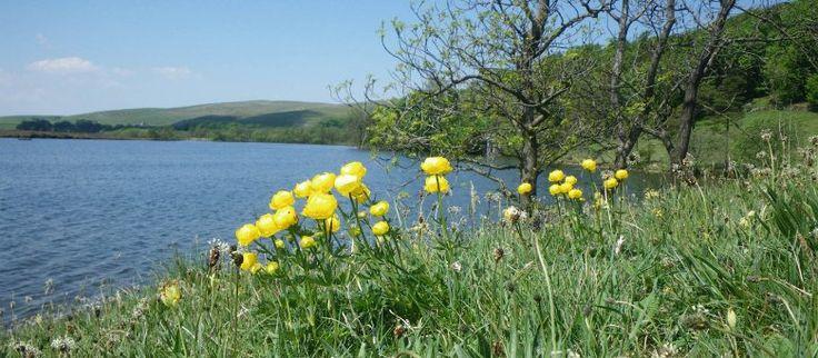 Summer flowers at Malham Tarn