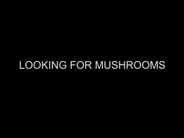 """""""Looking for mushrooms"""" (1967) Directed by: Bruce Conner"""