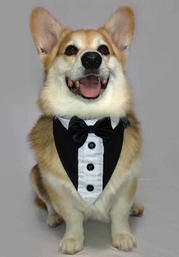 1000 Ideas About Dog Tuxedo On Pinterest Dog Wedding