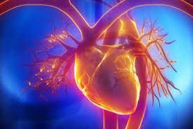 Obat Jantung Bengkak >> Jantung adalah organ paling utama dalam tubuh, jika jantung tidak berfungsi dengan baik, maka tubuh kita juga tidak stabil apalagi menjalani aktifitas-aktifitas tertentu, berikut kami berikan solusi tepat nya untuk anda yang memiliki keluhan Jantung Bengkak.