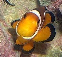 Reef safe fish