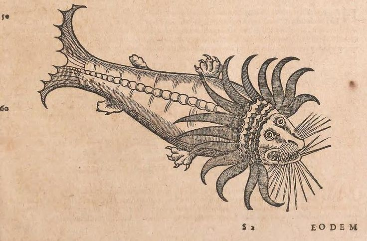 Aristotle introduced the world to the giant squid (which he called teuthos) in 350 B.C. ~ETS