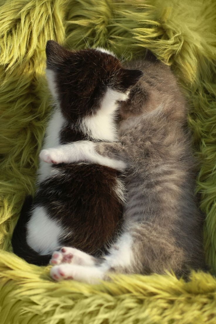 Kittens Outdoors in Natural Light - Cute Little Kittens Outdoors in Natural…