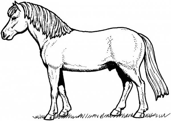 Horse With Fur Thickness