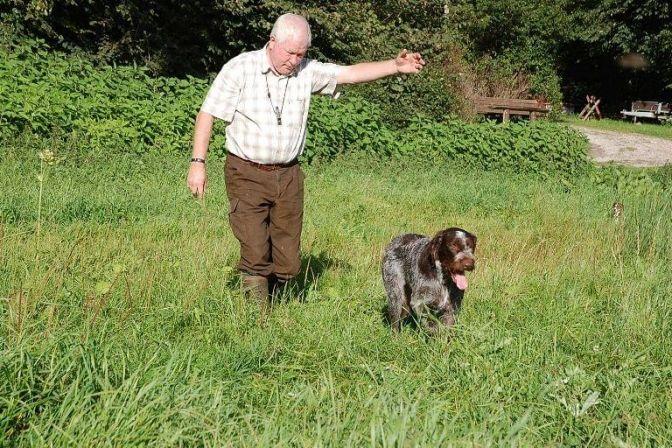 JAGTHUNDE: Er du ny jæger og skal til at gå på jagt, går du måske med overvejelser om at anskaffe en jagthund. Det kan være et svært valg. Hunden skal nemlig passe til den jagtform, man ønsker. En god hund er den bedste jagtkammerat. #hund #jagt
