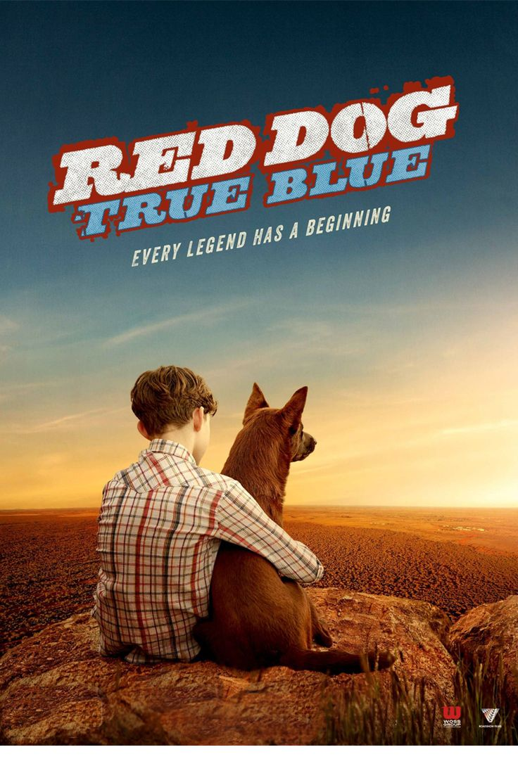 Red Dog True Blue London Premiere  AUS 2016 dir Kriv Stenders 88 mins Starring Bryan Brown, Jason Isaacs and Levi Miller.  Expanded from the short story by Louis de Bernieres (Captain Corelli's Mandolin), it tells the tale of Red from his humble beginnings as a pup, pulled from floodwaters after a cyclone by his first love, Mick, an orphaned boy who has come to live with this gruff father (Bryan Brown) on his remote desert cattle farm