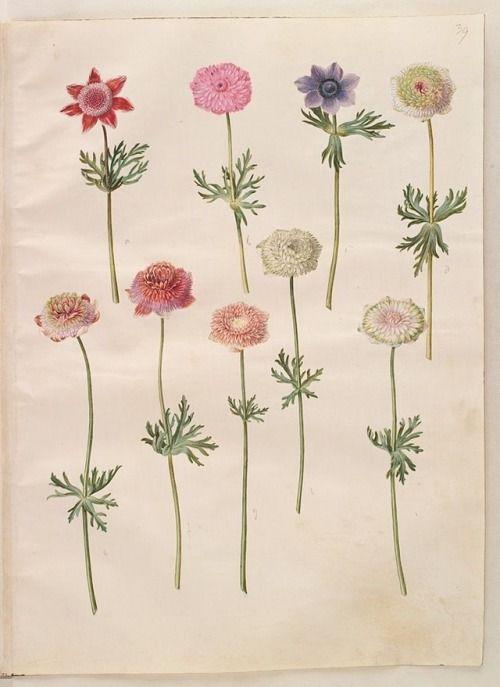 "oldfarmhouse: ""Botanical Garden  """
