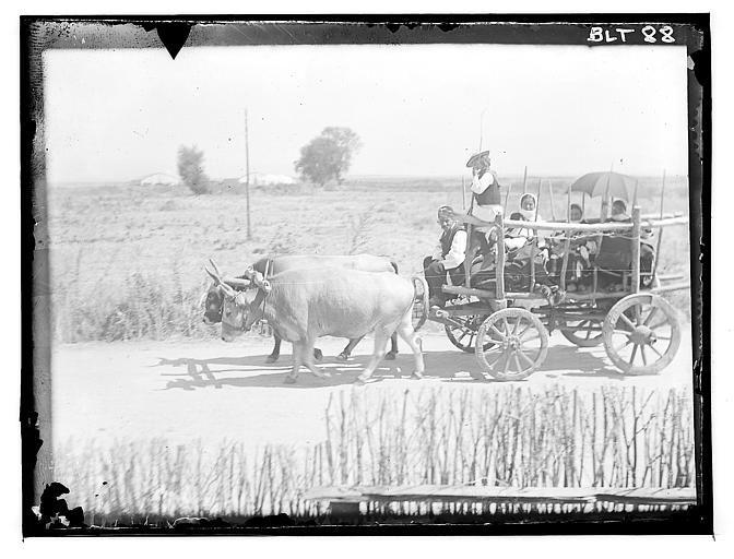 Grèce ; Macédoine ; Negocani (Νίκη-Φλώρινα)  (1916-1917) Légende Arrivée des invités en char tiré par une paire de boeufs Auteur photoBlanchet, Joseph