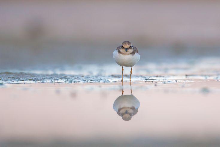 The scowl by Roberto Marchitelli