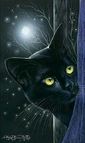 Gato preto ao luar   Black Cat art by Irina Garmashova ♥•♥•♥