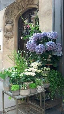 grouping smaller containers together with single plant varieties in each