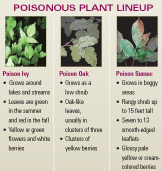 How To Get Rid Of Poison Ivy On Dogs