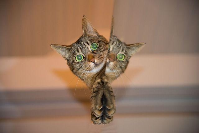 Morirás de risa al ver la reacción de este gato [vídeo]