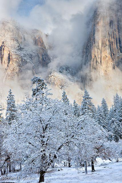 Yosemite National Park; photo by Richard Gaston via Flickr