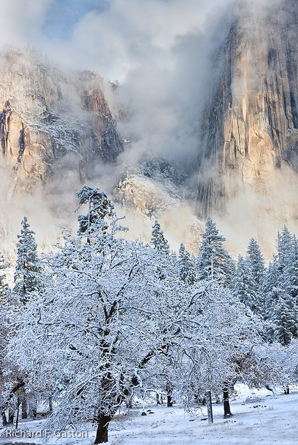 Snow laden Yosemite National Park, California