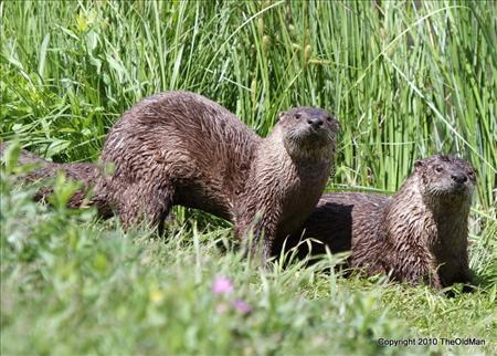 Gang at Otter Lake