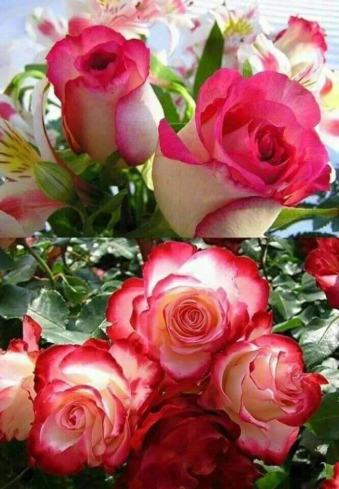 Pase lo que pase,yo sólo te quiero a ti.!!   Flores bonitas, Mejores flores, Flores exóticas
