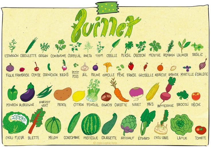 Juillet - Calendrier des fruits et légumes | pissenlit