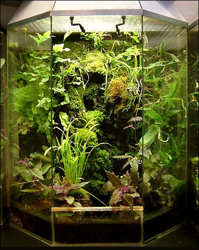 hexagon vivarium with misting system and different species of exotic plants