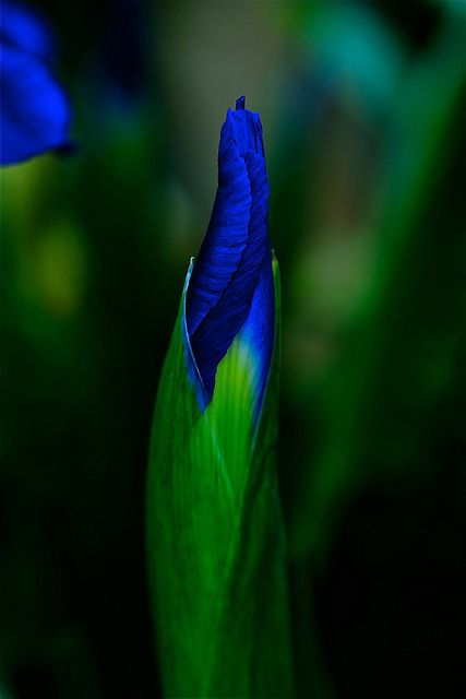 Iris. Love the color. I want a dress this color, and i want to wear it to the oscars.....we all have dreams right?