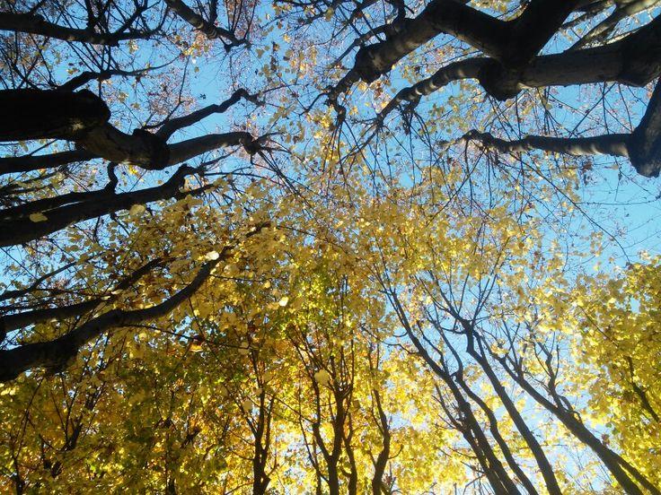 Sguardo al cielo, (Vercelli - Piemonte)