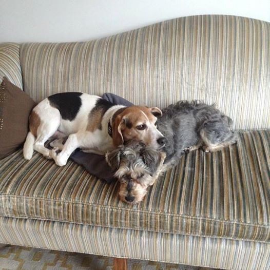 Pet Friendly Apartment Search: 91 Best Pet Care Images On Pinterest
