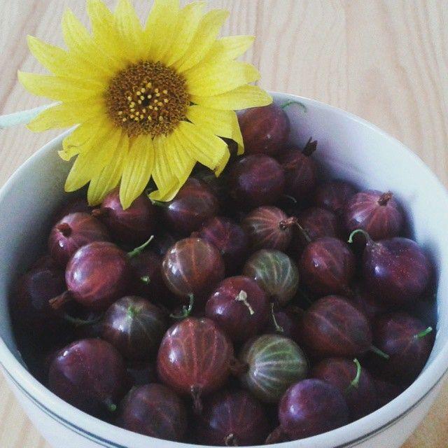 From the garden ) Mnaaaam! #befabulous #photo #brno #instagram #great#happy #Body#love#beuty #health#fitness#healthylifestyle#lifestyle#food#garden#flower