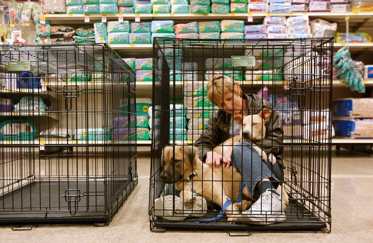 Joyce Clarin, of Bellevue, Iowa, sits in a cage with Macho, left, while Pee-wee falls asleep in her lap during a pet adoption event for the Jackson County Humane Society held at PetSmart in Dubuque, Iowa, on Nov. 25. The Jackson County Humane Society has about 25 animals from the east coast, many of them orphaned by Superstorm Sandy. (Jeremy Portje/Telegraph Herald via Associated Press) #