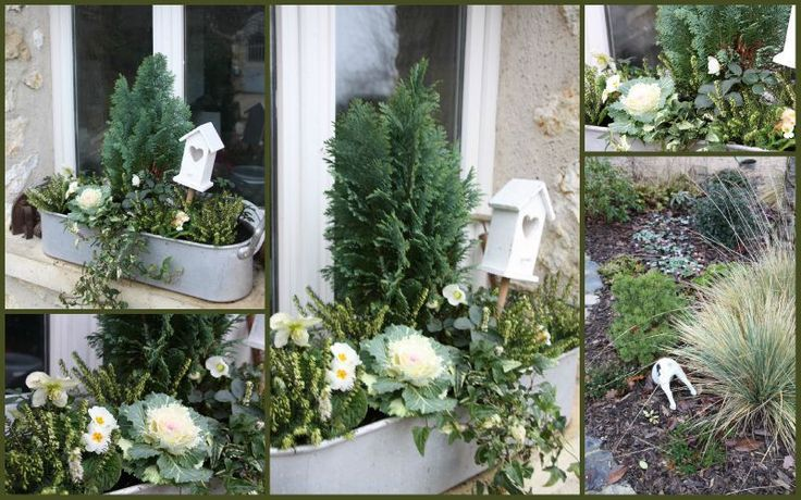 Jardinière d' hiver