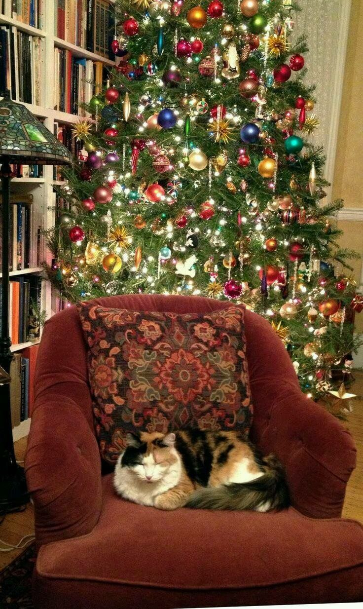 best images about christmas cats tabby cats from a proper bostonian comes decorating the tree a very funny essay on the role each of four cats plays in helping to decorate accompanying