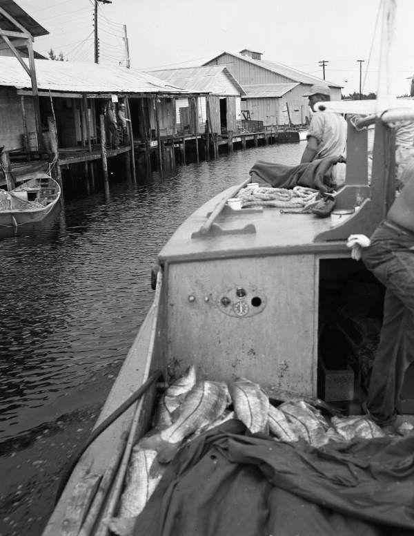 784 best images about historic antique fishing photos on for Commercial fishing florida