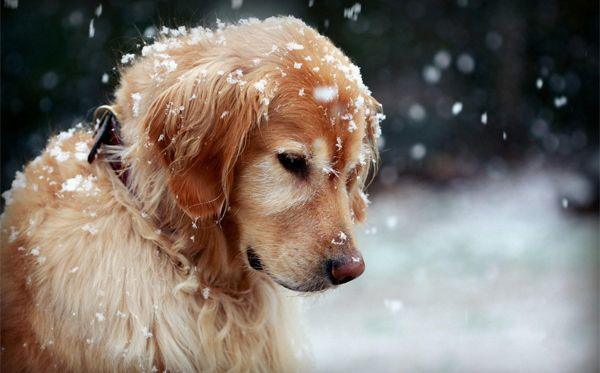 Winter Photography Tips and Ideas to Make You Master the Season