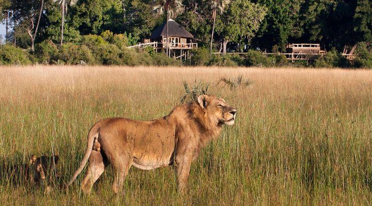 ©Wilderness Safaris|Tubu Tree Camp, Botswana