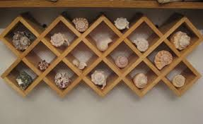 display seashells - Google Search