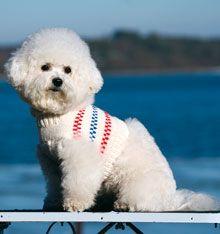 365 saker du kan sticka: hundtröja
