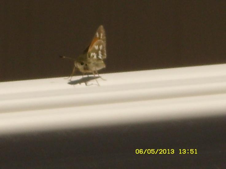 Little flutterbye on the fence