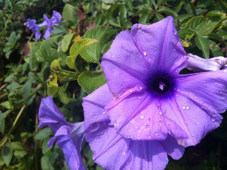 Flowers - Mooloolaba, Queensland, Australia