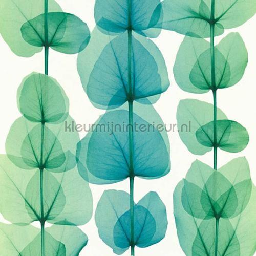 X ray plants behang 342454 uit de collectie X-Ray  AS Creation voordelig bij kleurmijninterieur