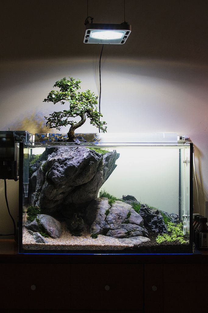 best 25 aquarium ideas ideas on pinterest aquarium fish tank and fish tanks