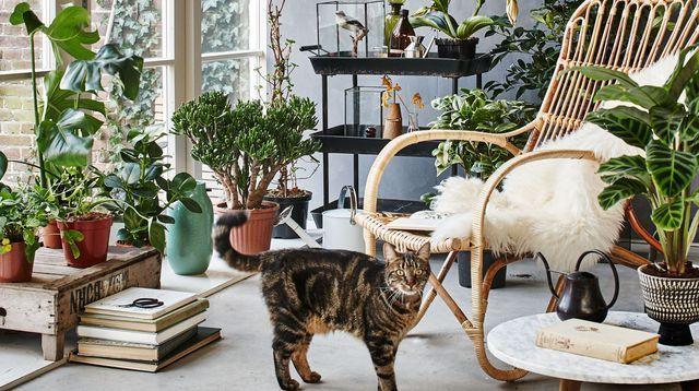 1000 id es sur le th me jardin d 39 hiver sur pinterest. Black Bedroom Furniture Sets. Home Design Ideas